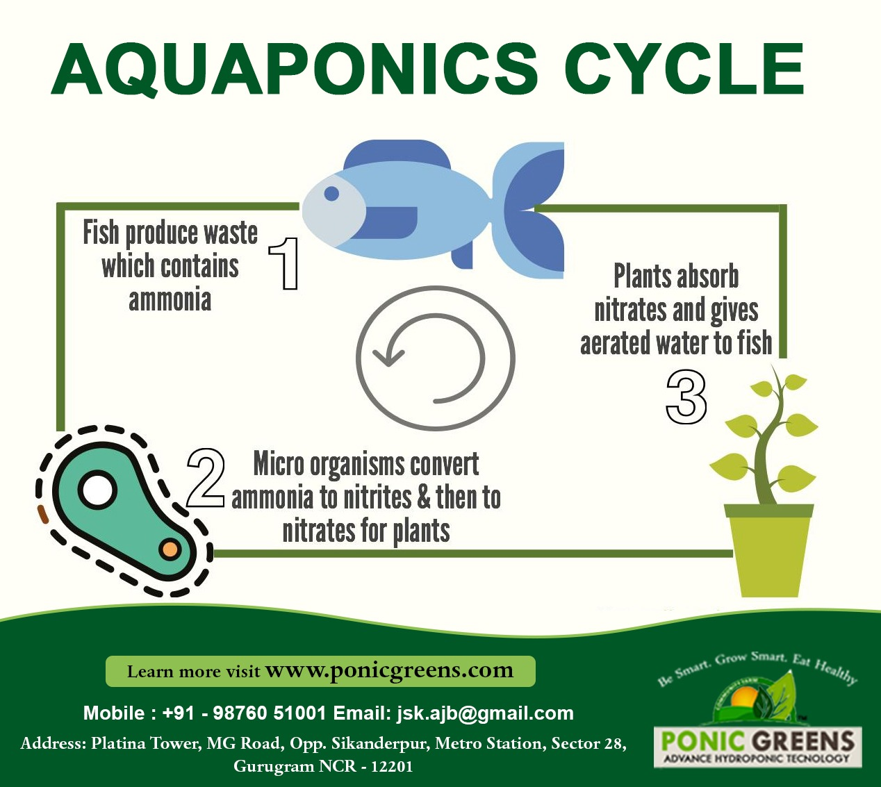 All About Aquaponics