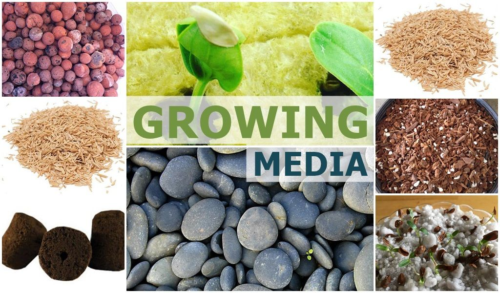 Hydroponic Grow Media and the types of media