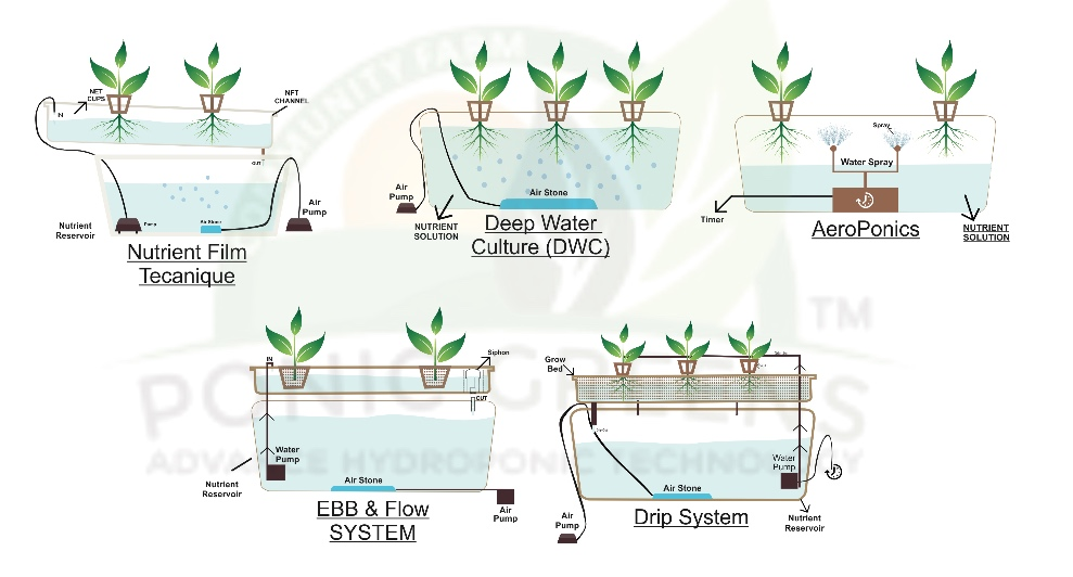 Recirculating Deep Water Culture Diagram