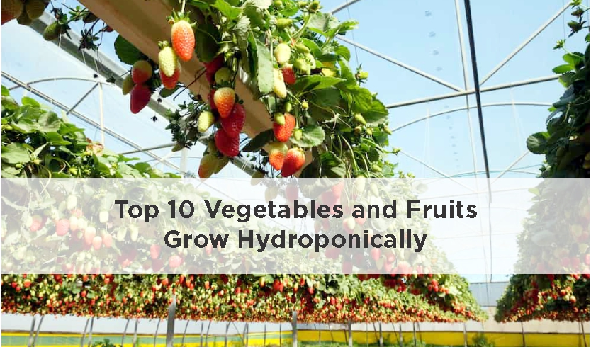 Top 10 Fruits and Vegetables grown hydroponically