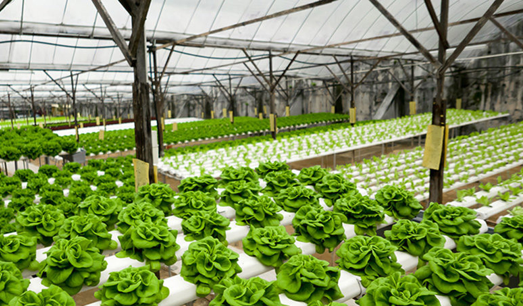 Outdoor Hydroponics: 6 Tips for Optimum Yields
