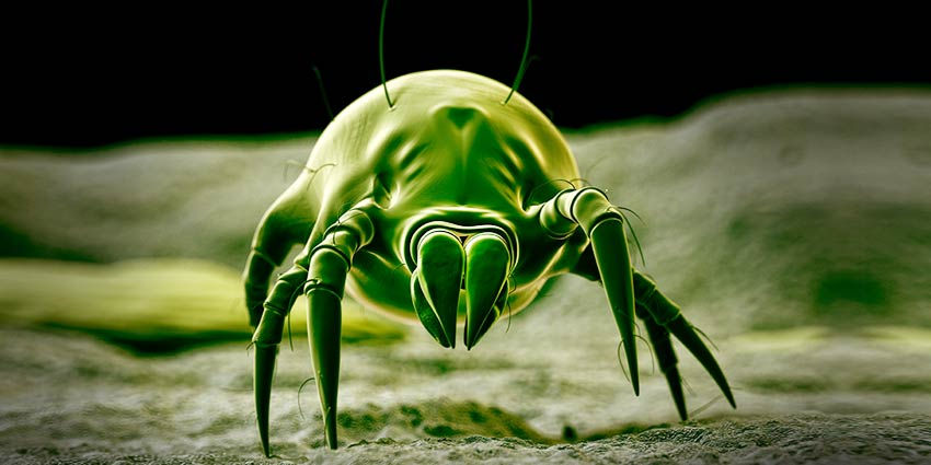 Natural Pest Control for the Indoor Gardener