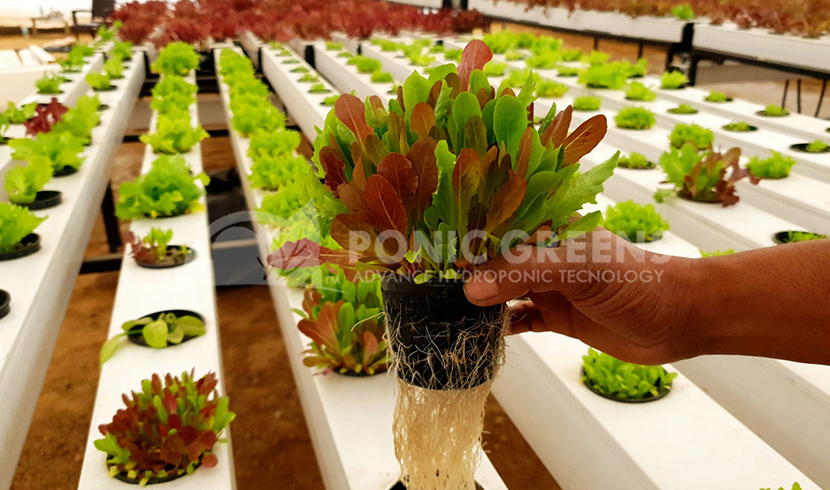 Buy Hydroponic Online in India