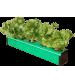 5 Plant DWC Home Kit