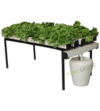 Rooftop NFT ( System 50 Plant )